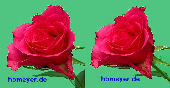 red rose in stereo